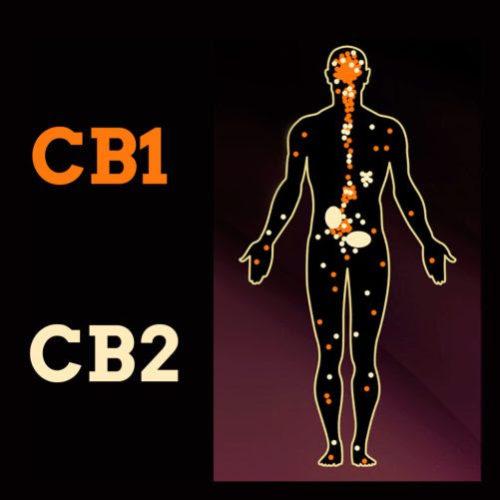 CB1 - CB2