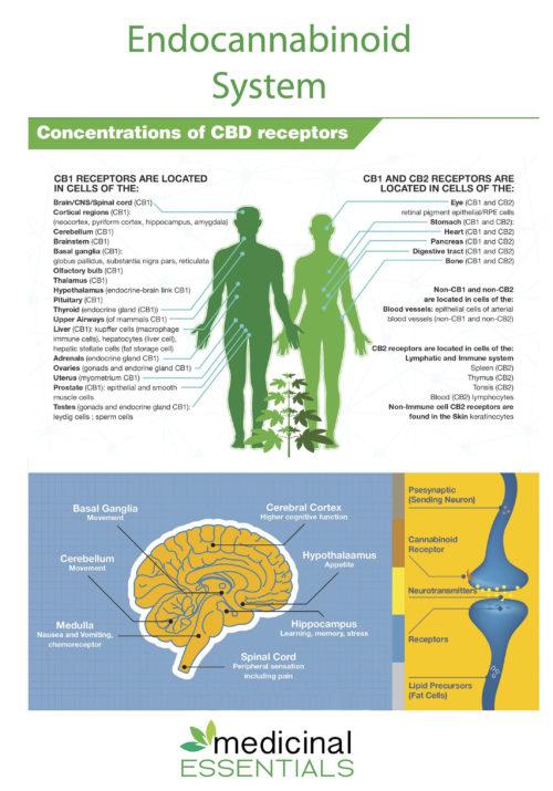 Concentrations of CBD receptors